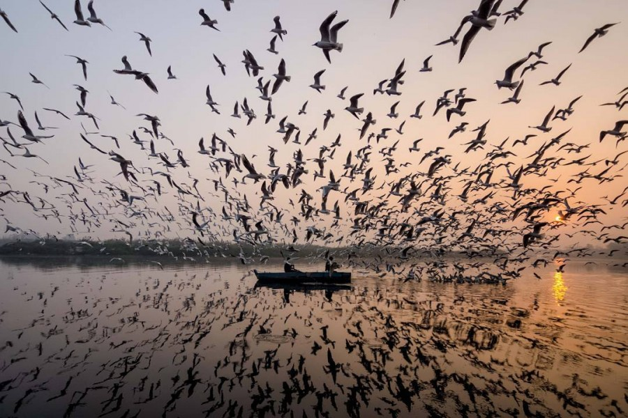 Breathtaking Images of Seagulls Flying Over India's Rivers