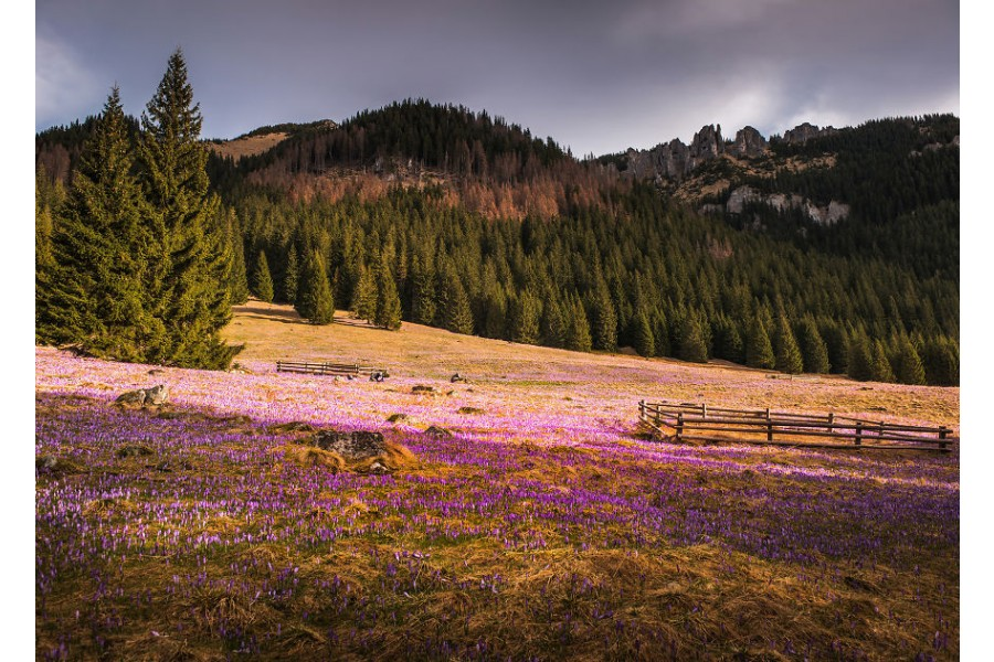 The Surreal Beauty Of Spring In Mountain Meadows In Poland